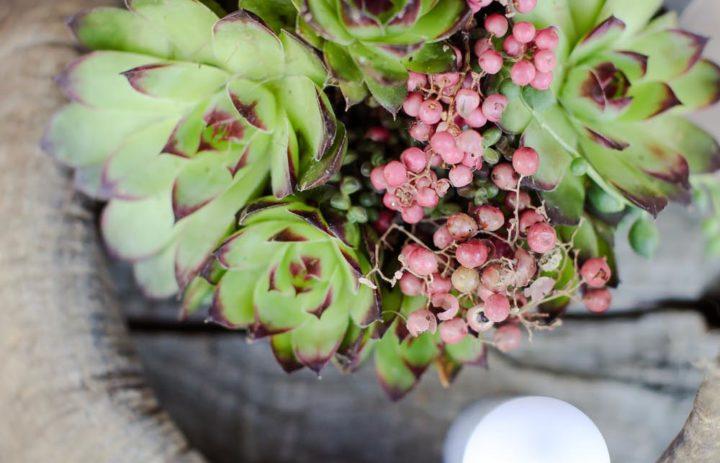 decoration-table-inspiration-trappeur-succulentes-corne