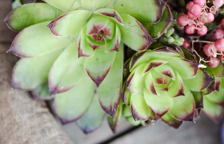 detail-decoration-table-mariage-succulente