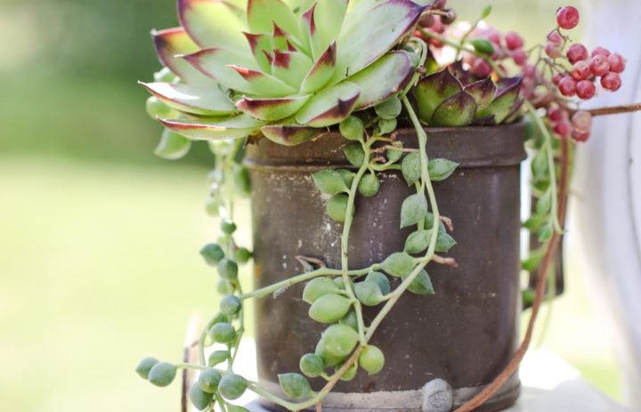 inspiration-decoration-mariage-pot-succulentes