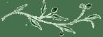 Elément graphique de footer du logo de Marylène Louis, fleuriste créateur à Tulle